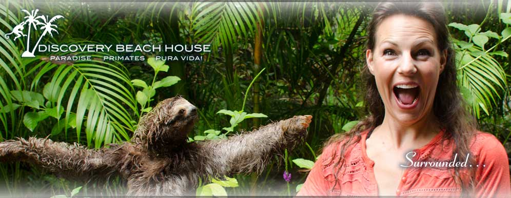 sloth Discovery Beach House vacation rental